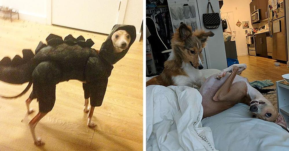 Сородичи опасались слепого гиперактивного пса, но нашёлся друг, полюбивший его со всеми странностями
