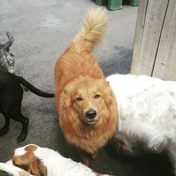 When I Worked At A Dog Daycare (I