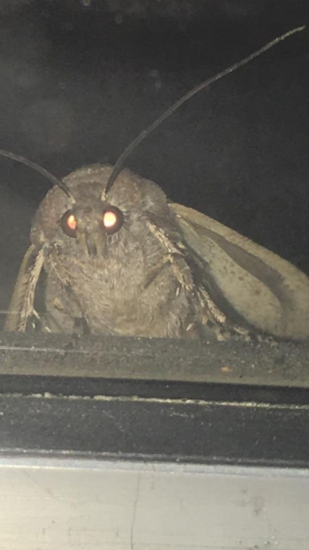 Close Up Of Moth Outside My Window