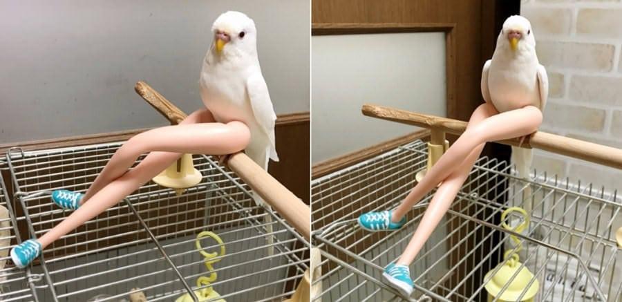 Пользователи сети делятся фотографиями животных, поведение которых вызывает смех и много вопросов 94