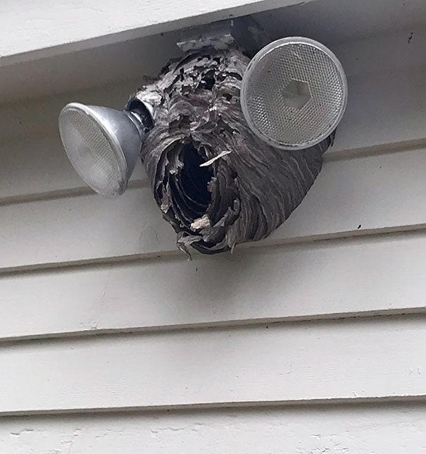 This Hornets Nest Looks Kind Of Like A Hornet's Head