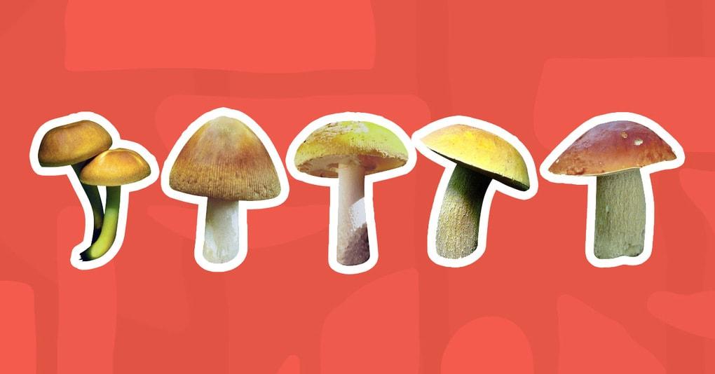 Тест: Сможете ли вы правильно определить, какие грибы съедобные, а какие — нет?