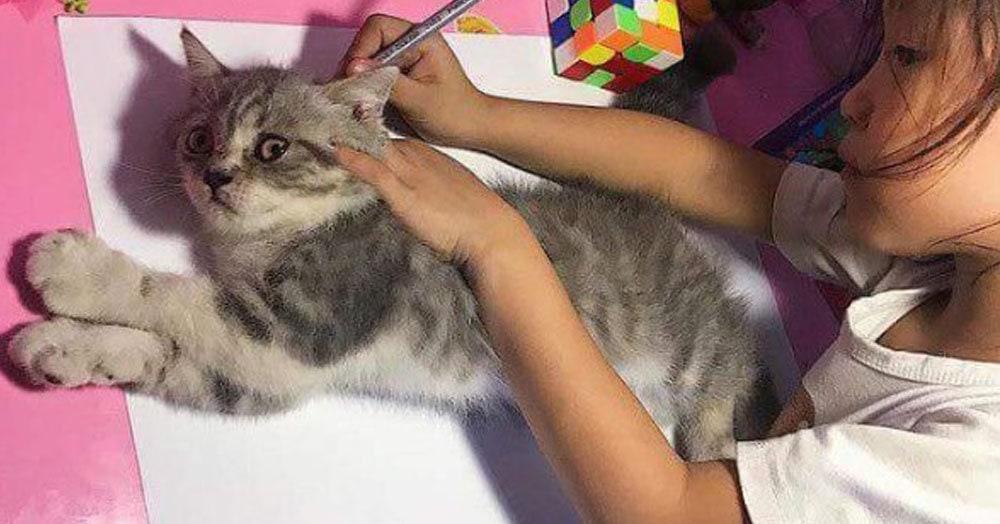 Девочка обвела кота карандашом, и результат получился таким смешным, что его тут же сделали мемом