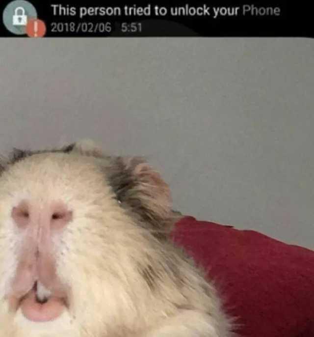 Пользователи сети делятся фотографиями животных, поведение которых вызывает смех и много вопросов 77
