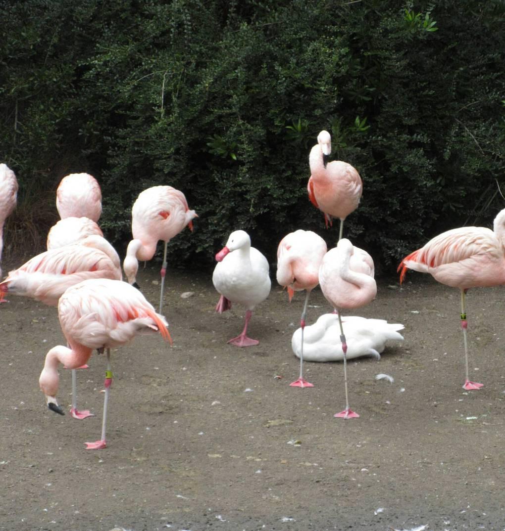 Пользователи сети делятся фотографиями животных, поведение которых вызывает смех и много вопросов 88