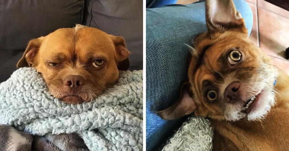 Этот пёс по кличке Бекон обладает невероятной мимикой, и он стал новым Лёхой животного мира