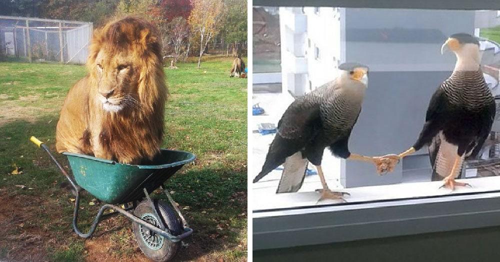 Пользователи сети делятся фотографиями животных, поведение которых вызывает смех и много вопросов