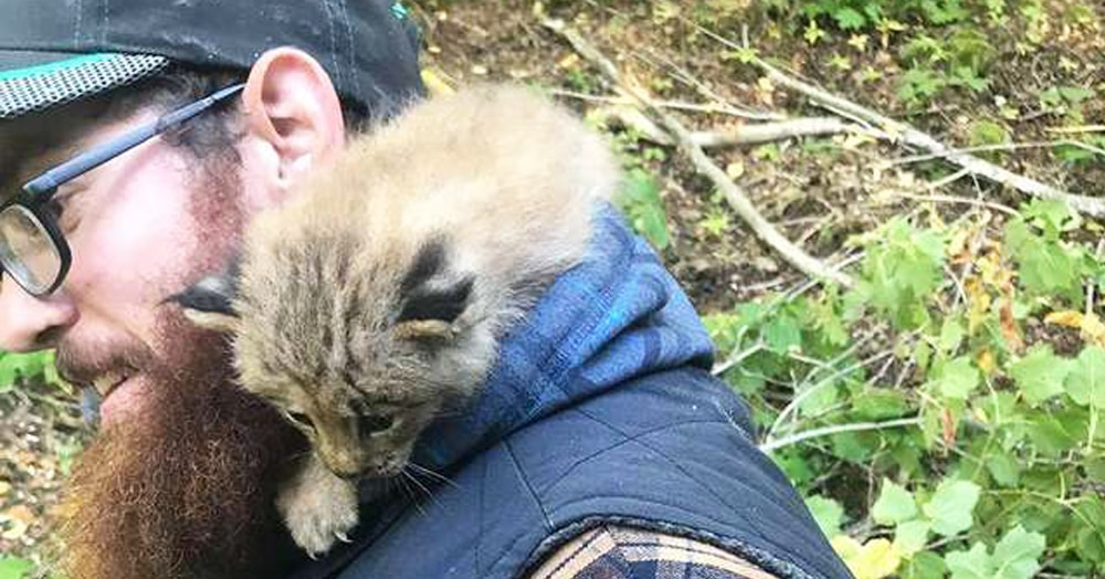Канадец заметил крошечного котёнка и решил ему помочь. Но такую кису вряд ли захочется держать дома