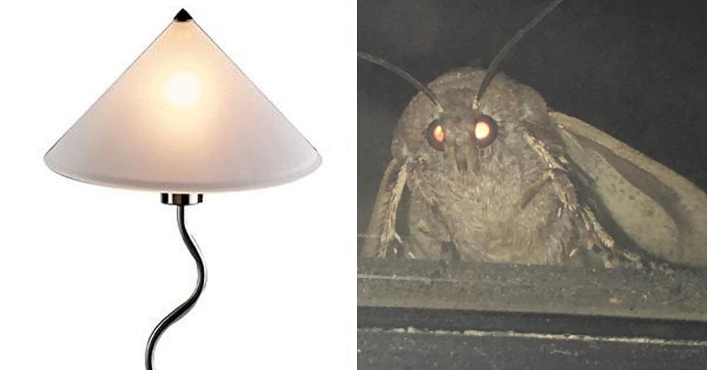 В сети набирает популярность странный мем про моль и лампу. Что это такое и почему это так смешно