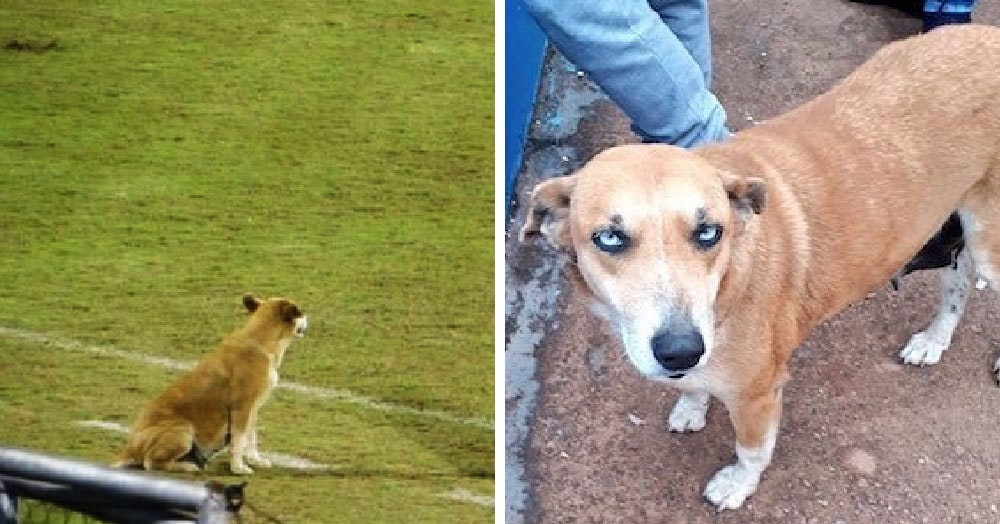 Тренер футбольного клуба покормил бездомную собаку, а она осталась с ним и принесла удачу всей команде