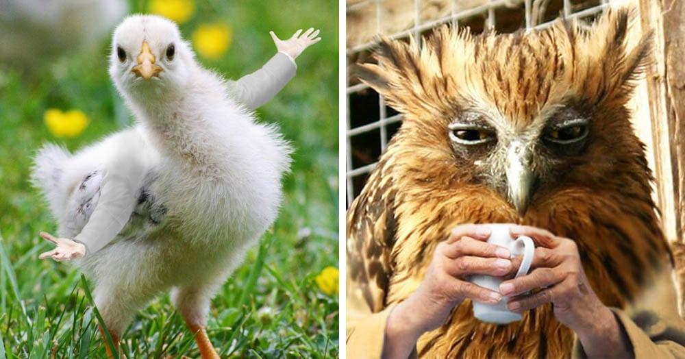 Пользователи представили, как выглядели бы птицы с человеческими руками — и им они чертовски идут!