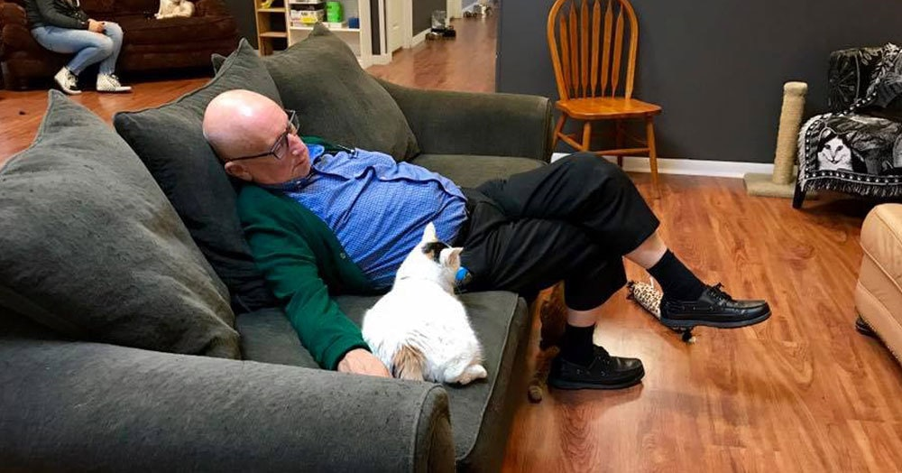 75-летний мужчина просто спал с приютскими котиками и случайно собрал для них 40 тысяч долларов