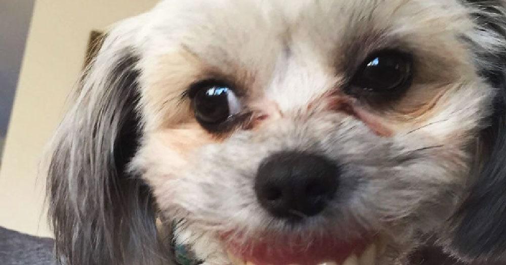 Собака стащила со стола зубные протезы и из милого пёсика превратилась в неведомого зверя