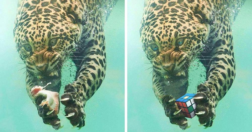 Эмоциональный леопард нырнул под воду за рыбкой, а вынырнул героем захватывающего фотошоп-сражения