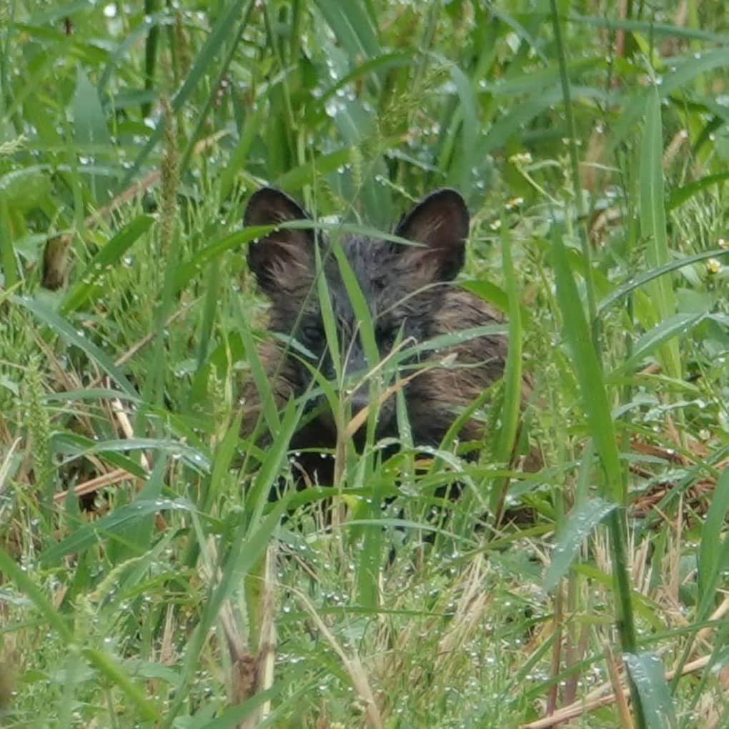 Японец нашёл котят, которые, по мнению ветеринара, оказались щенятами. Но шутка в том, что они ни те, ни другие 2