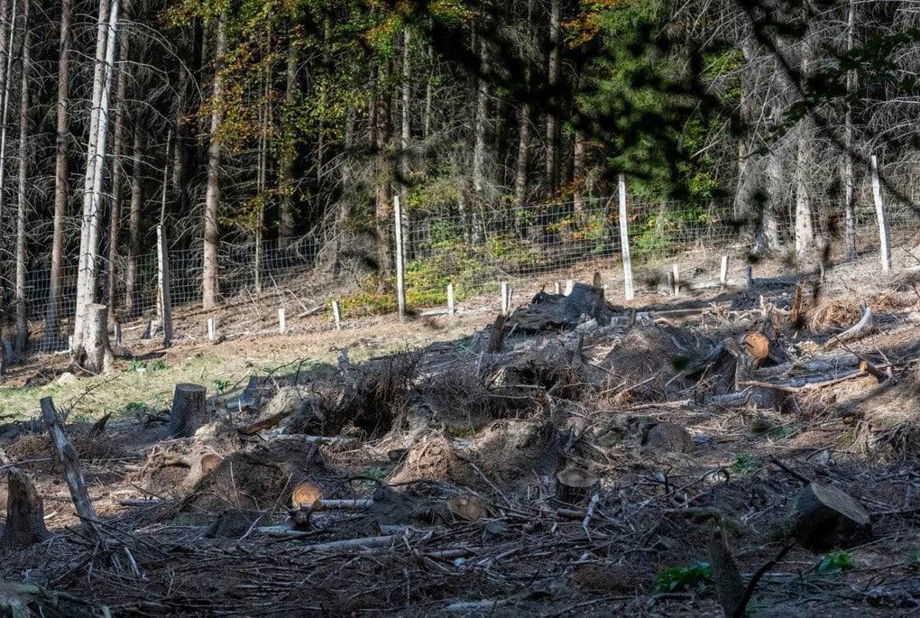 Фотограф сделал кадр и случайно создал загадку в стиле «Найди оленя среди пней». И да, это сложно! 1
