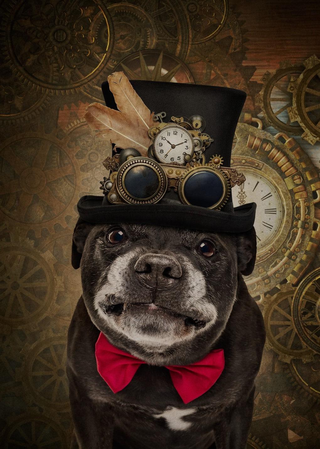 Фотограф из Мельбурна примерил человеческие образы двенадцати собакам и одному дерзкому коту 9