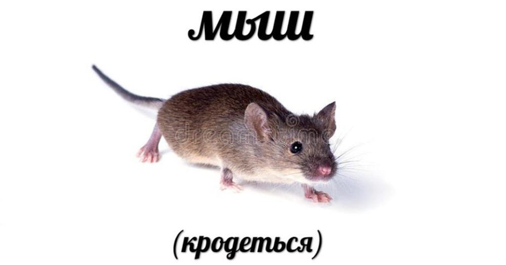 Кто такой мыш и почему он кродеться. История одного мема