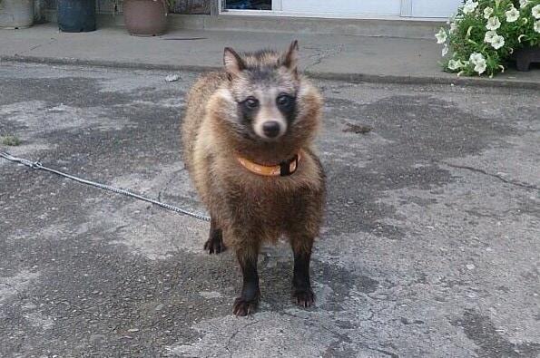 Японец нашёл котят, которые, по мнению ветеринара, оказались щенятами. Но шутка в том, что они ни те, ни другие 4
