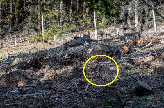 Фотограф сделал кадр и случайно создал загадку в стиле «Найди оленя среди пней». И да, это сложно! 3