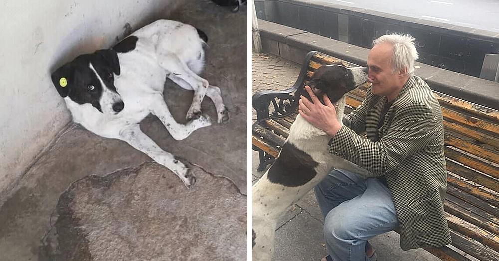 Мужчина встретил пса, которого тщетно искал 3 года. Скорее ищите дождь, чтобы спрятать свои слёзы