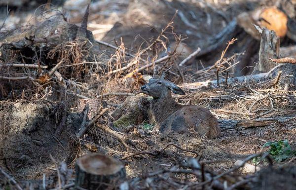 Фотограф сделал кадр и случайно создал загадку в стиле «Найди оленя среди пней». И да, это сложно! 4