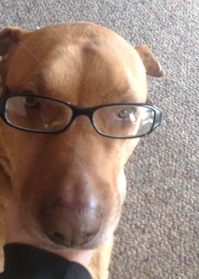 Девушка устроила слежку за своей собакой, т.к. та стала сбегать по ночам и толстеть. След привёл к Макдональдсу 2