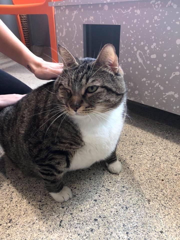 Кот Пончик искал новый дом, но был очень толст. Настолько, что от новых хозяев потребовали безжалостности 4