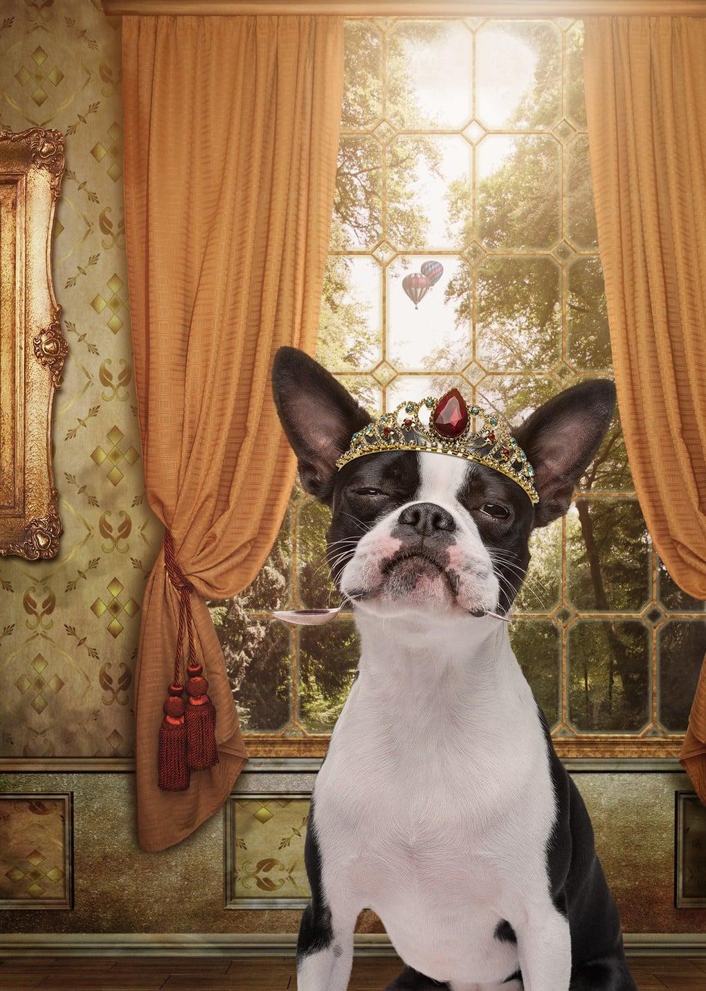 Фотограф из Мельбурна примерил человеческие образы двенадцати собакам и одному дерзкому коту 2