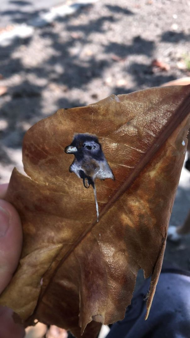 Pigeon Pooped A Portrait Of Itself On A Leaf