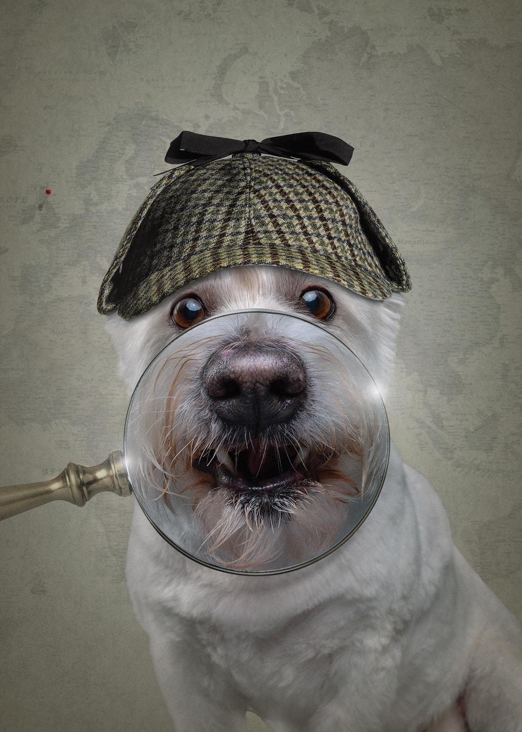 Фотограф из Мельбурна примерил человеческие образы двенадцати собакам и одному дерзкому коту 3