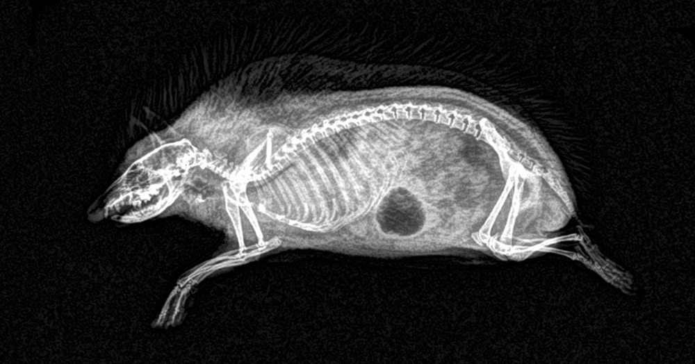 Орегонский зоопарк опубликовал рентгеновские снимки животных. Сразу догадаетесь, кто есть кто?