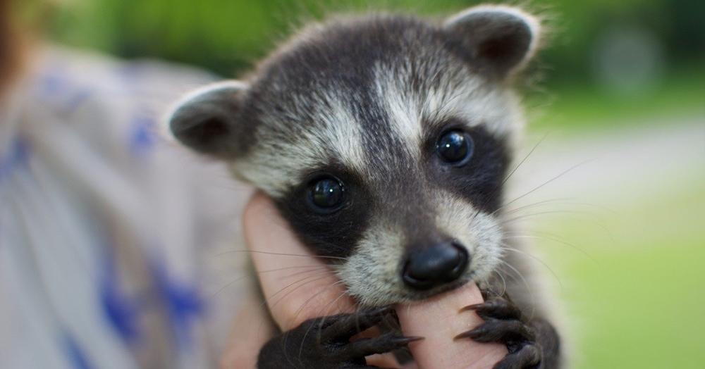 Тест: Знаете ли вы, как называются детёныши животных?