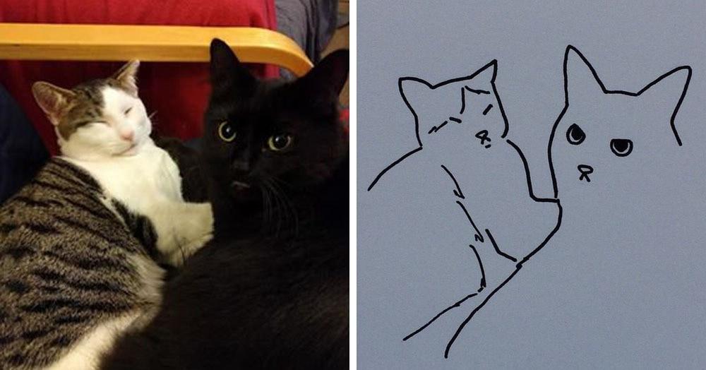Бразильянка превращает живых котов в нарисованных, и от этого они становятся только смешнее 55