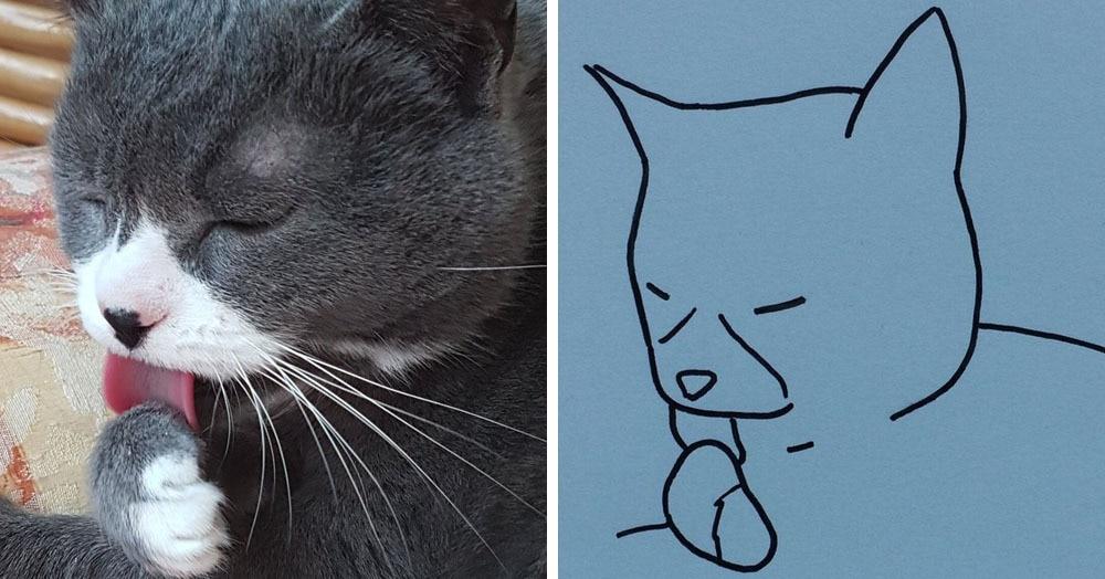 Бразильянка превращает живых котов в нарисованных, и от этого они становятся только смешнее 58