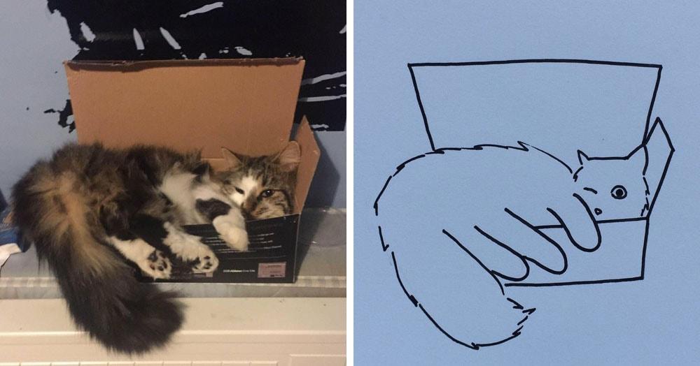 Бразильянка превращает живых котов в нарисованных, и от этого они становятся только смешнее 59