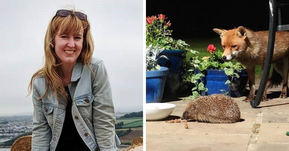 Британка подкармливала диких лис и заметила рядом ежа. Она думала, что ему конец, но всё пошло не по сценарию