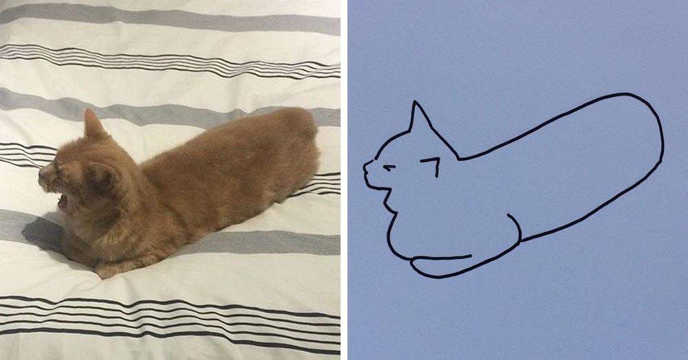 Бразильянка превращает живых котов в нарисованных, и от этого они становятся только смешнее 60