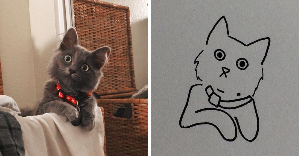 Бразильянка превращает живых котов в нарисованных, и от этого они становятся только смешнее 62