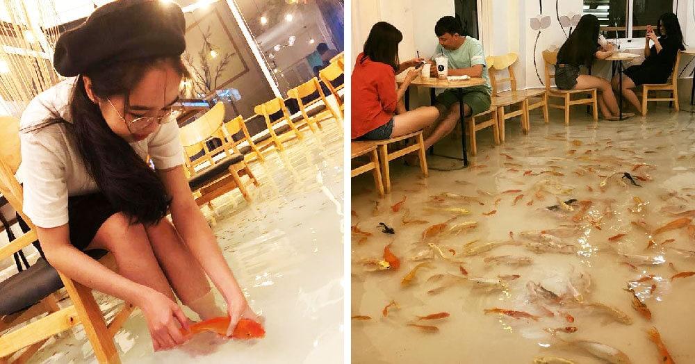 В это кафе во Вьетнаме не пускают в обуви, а всё потому, что на его полу плавают сотни рыб