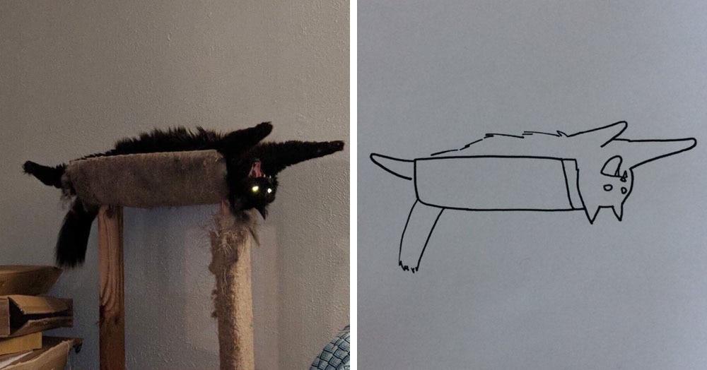 Бразильянка превращает живых котов в нарисованных, и от этого они становятся только смешнее 63