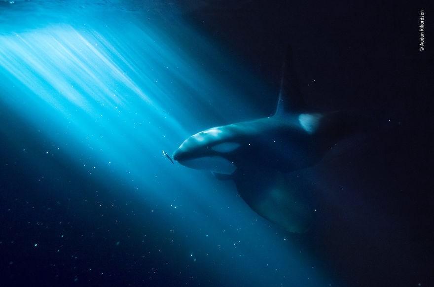 «Ночная закуска» Аудун Рикардсен, Норвегия, высоко оценил 2018 год под водой