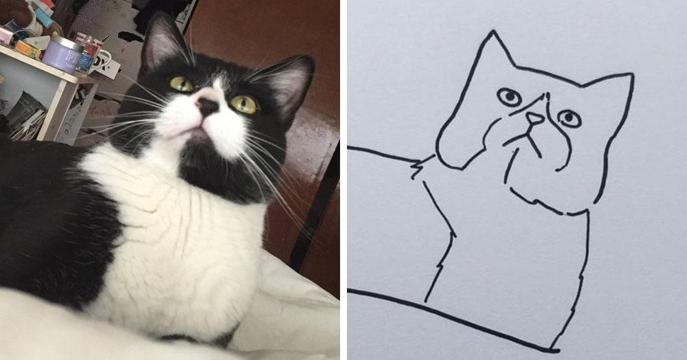 Бразильянка превращает живых котов в нарисованных, и от этого они становятся только смешнее 69