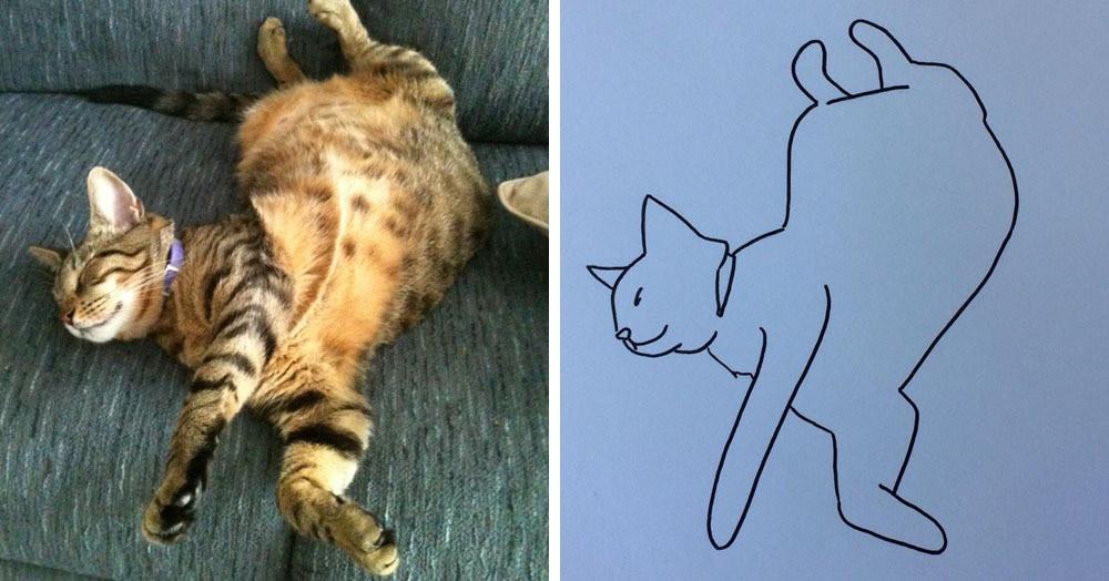 Бразильянка превращает живых котов в нарисованных, и от этого они становятся только смешнее 72