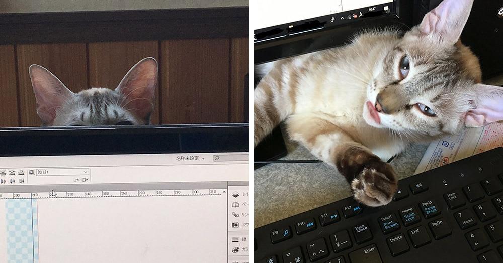 Житель Японии создал анти-кошачью защиту у клавиатуры и весело рассказал о последствиях эксперимента