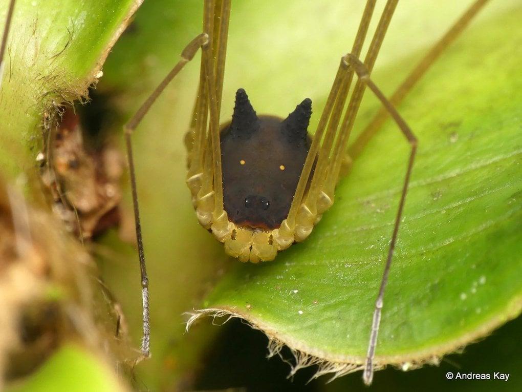 В лесах найдено чудовищно милое существо, похожее на мультяшного зверя. Арахнофобы бьются в истерике 17