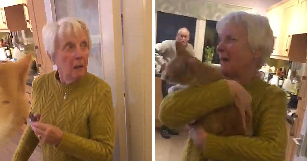 Внук возвращает бабуле котёнка, который пропал за неделю до этого. Бабуля плачет, и вы тоже будете