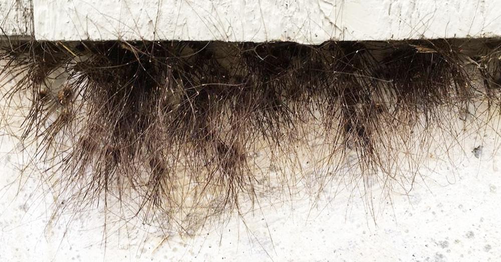 На стене в Аляске появился странный мох, который умеет ползать. И это станет вашим ночным кошмаром