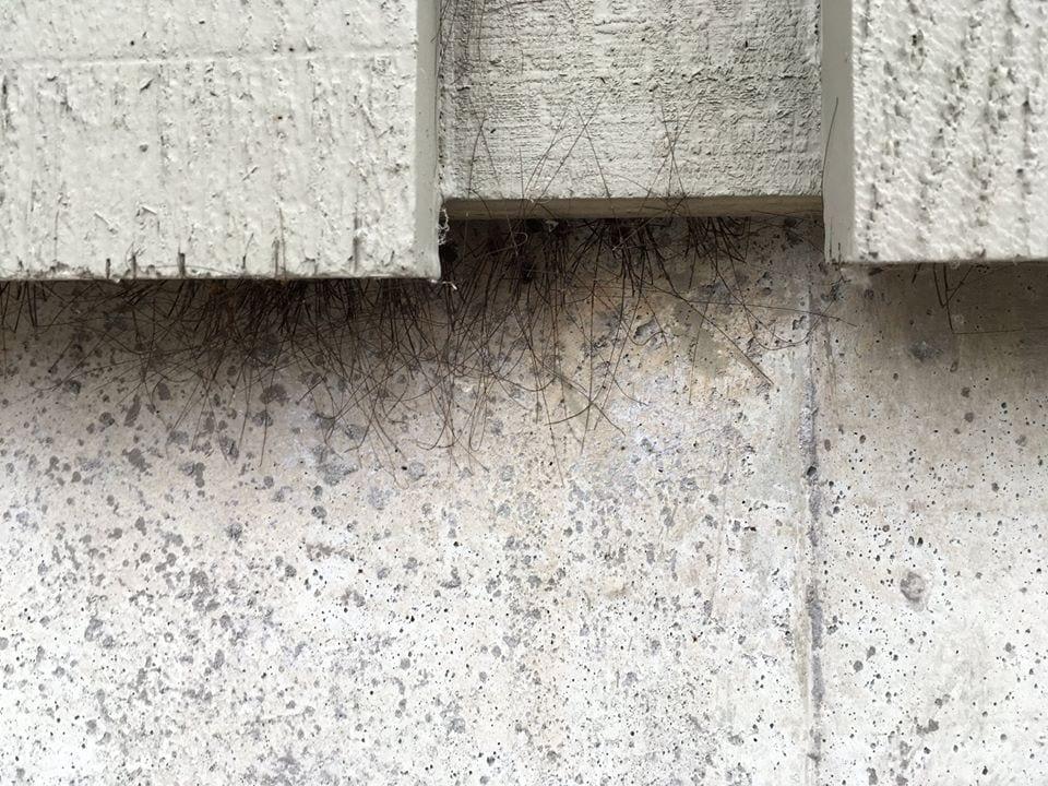 На стене в Аляске появился странный мох, который умеет ползать. И это станет вашим ночным кошмаром 1