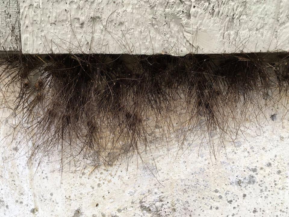 На стене в Аляске появился странный мох, который умеет ползать. И это станет вашим ночным кошмаром 2